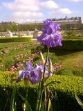 Journées du patrimoine 2016 -Promenade-découverte du jardin des Tuileries