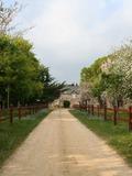 Rendez Vous aux Jardins 2018 -Promenade et échange de plantes au jardin Mac Mahon