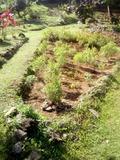 Rendez Vous aux Jardins 2018 -Jardin de thés, d'épices et de production de fibres