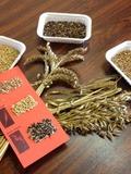 Journées du patrimoine 2016 -Réalisation d'un herbier de céréales