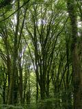 Rendez Vous aux Jardins 2018 -Réchauffement climatique à Kerguéhennec