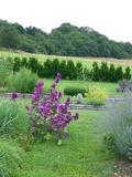 Rendez Vous aux Jardins 2018 -Découverte d'un jardin gallo-romain