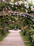 Rendez Vous aux Jardins 2018 -Rendez-vous aux jardins à la Roseraie du Val-de-Marne