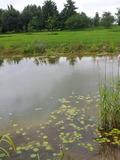 Rendez Vous aux Jardins 2018 -Visite commentée du Jardin d'eau et de poésie à Zuytpeene