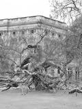 Rendez Vous aux Jardins 2018 -Visite guidée du jardin du château de Bizy