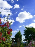 Rendez Vous aux Jardins 2018 -Visite commentée du jardin du Moyen Âge