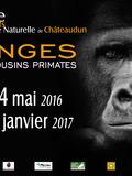 Journées du patrimoine 2016 -Singes, nos cousins primates