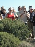 Journées du patrimoine 2016 -SORTIE BOTANIQUE