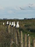 Journées du patrimoine 2016 -Sortie oiseaux et plantes aux abords Réserve Naturelle Nationale de Lilleau des Niges
