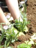 Rendez Vous aux Jardins 2018 -Stage jardin - Apprentissage du « b-a ba » du jardinier au parc de Clères