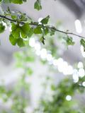 Journées du patrimoine 2016 -The Bulk Garden / Le Jardin en Stock de Christophe Ponceau