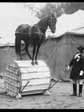 Journées du patrimoine 2016 -Tournassoud, un commandant - photographe (1866-1951)