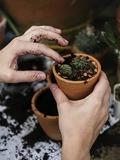 Rendez Vous aux Jardins 2018 -Troc de plantes à Avallon