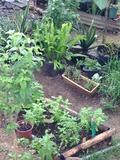 Rendez Vous aux Jardins 2018 -Un jardin de simples