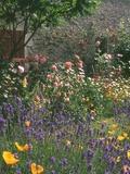 Rendez Vous aux Jardins 2018 -Un jardin romantique autour de la Vénus de Quinipily