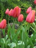 Rendez Vous aux Jardins 2018 -Un parcours fabuleux au sein du parc floral