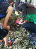 Rendez Vous aux Jardins 2018 -«Un zoo sous les feuilles»