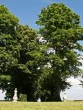 Rendez Vous aux Jardins 2018 -Promenade bucolique au sein d'un parc paysager