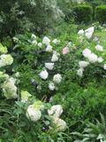 Rendez Vous aux Jardins 2018 -Venez découvrir un jardin romantique créé par des passionnés