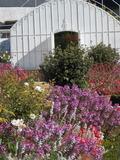 Rendez Vous aux Jardins 2018 -Vente exceptionnelle de plants du jardin du château