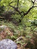 Journées du patrimoine 2016 -Vestiges du passé en forêt