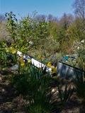 Rendez Vous aux Jardins 2018 -Visite du jardin avec des élèves de l'école des Frères Chappes.