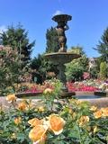 Rendez Vous aux Jardins 2018 -Visite de découverte de la Roseraie de Schiltigheim