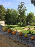 Rendez Vous aux Jardins 2018 -Visite autour des agrumes pour découvrir l'histoire de l'acclimatation des premiers orangers de France par Dom Pacello