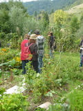 Rendez Vous aux Jardins 2018 -Visite commentée d'un jardin conduit en permaculture