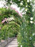 Rendez Vous aux Jardins 2018 -Visite commentée des jardins du Rosaire.