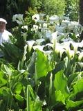 Rendez Vous aux Jardins 2018 -Visite commentée du jardin des mille fleurs