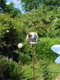 Rendez Vous aux Jardins 2018 -Visite commentée du jardin des plantes à couleurs.