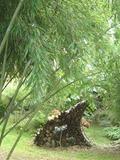 Rendez Vous aux Jardins 2018 -Visite commentée du jardin