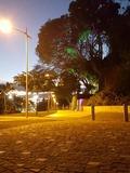 Rendez Vous aux Jardins 2018 -Visite commentée du parc Elliptique de Pointe-à-Pitre : Jardin d'Henri IV et Square Guy Tirolien