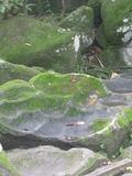 Journées du patrimoine 2016 -A la découvert du parc des roches gravées