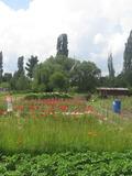 Rendez Vous aux Jardins 2018 -Visite commentée du Val maraîcher de la Baratte