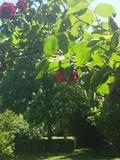 Rendez Vous aux Jardins 2018 -Visite d'un jardin anglais biologique près du Tarn en Haute Garonne