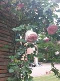 Rendez Vous aux Jardins 2018 -Visite d'un jardin anglais en Haute Garonne
