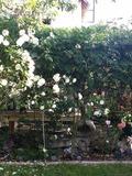 Rendez Vous aux Jardins 2018 -Découvrez un petit jardin de ville qui saura vous ravir !
