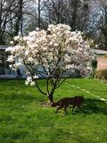 Rendez Vous aux Jardins 2018 -Visite d'un jardin de particulier