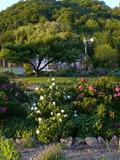 Rendez Vous aux Jardins 2018 -Visite libre ou guidée d'une roseraie jardin en permaculture.