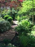 Rendez Vous aux Jardins 2018 -Visite commentée d'environ 1h30 dans un jardin forestier paysagé et découverte des collections d'Acer, Cercis ou encore Metasequoia.