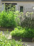 Rendez Vous aux Jardins 2018 -Visite découverte autour des plantes médicinales et des arbres fruitiers