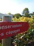 Rendez Vous aux Jardins 2018 -Visite découverte du conservatoire des cépages