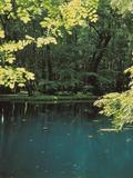 Rendez Vous aux Jardins 2018 -Visite découverte de l'univers des Fontaines Bleues