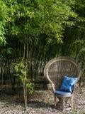 Rendez Vous aux Jardins 2018 -Visite-découverte de la bambouseraie de Lornay.