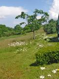 Rendez Vous aux Jardins 2018 -Visite libre et commentée des jardins du conservatoire botanique national du Massif Central.