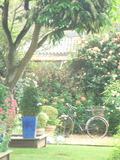 Rendez Vous aux Jardins 2018 -Visite découverte du jardin bleu