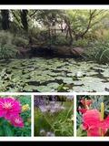 Rendez Vous aux Jardins 2018 -Visite commentée du jardin botanique de Clermont-Ferrand