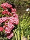 Rendez Vous aux Jardins 2018 -Visite découverte du jardin botanique et de ses 4000 plantes.